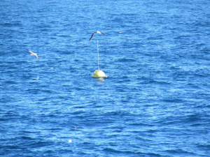 Datawell Wave Buoy, Falkland Islands (Source: Premier Oil)